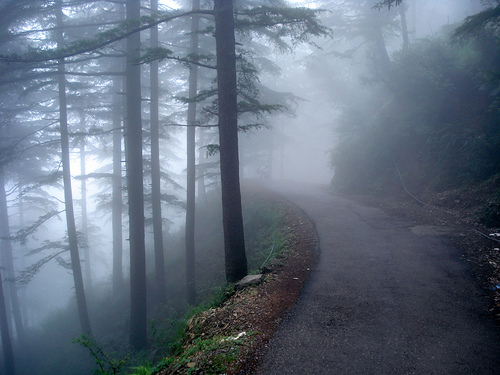 forest road 1