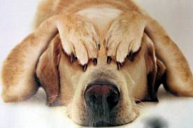 Dog Feedback